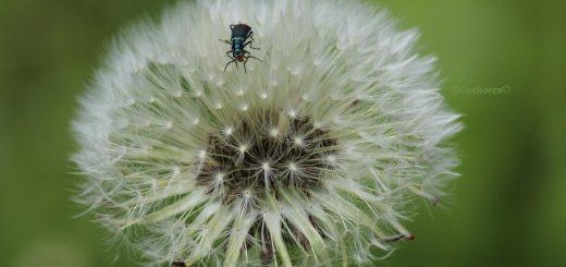 Globe_Insecte_GeekAnimea