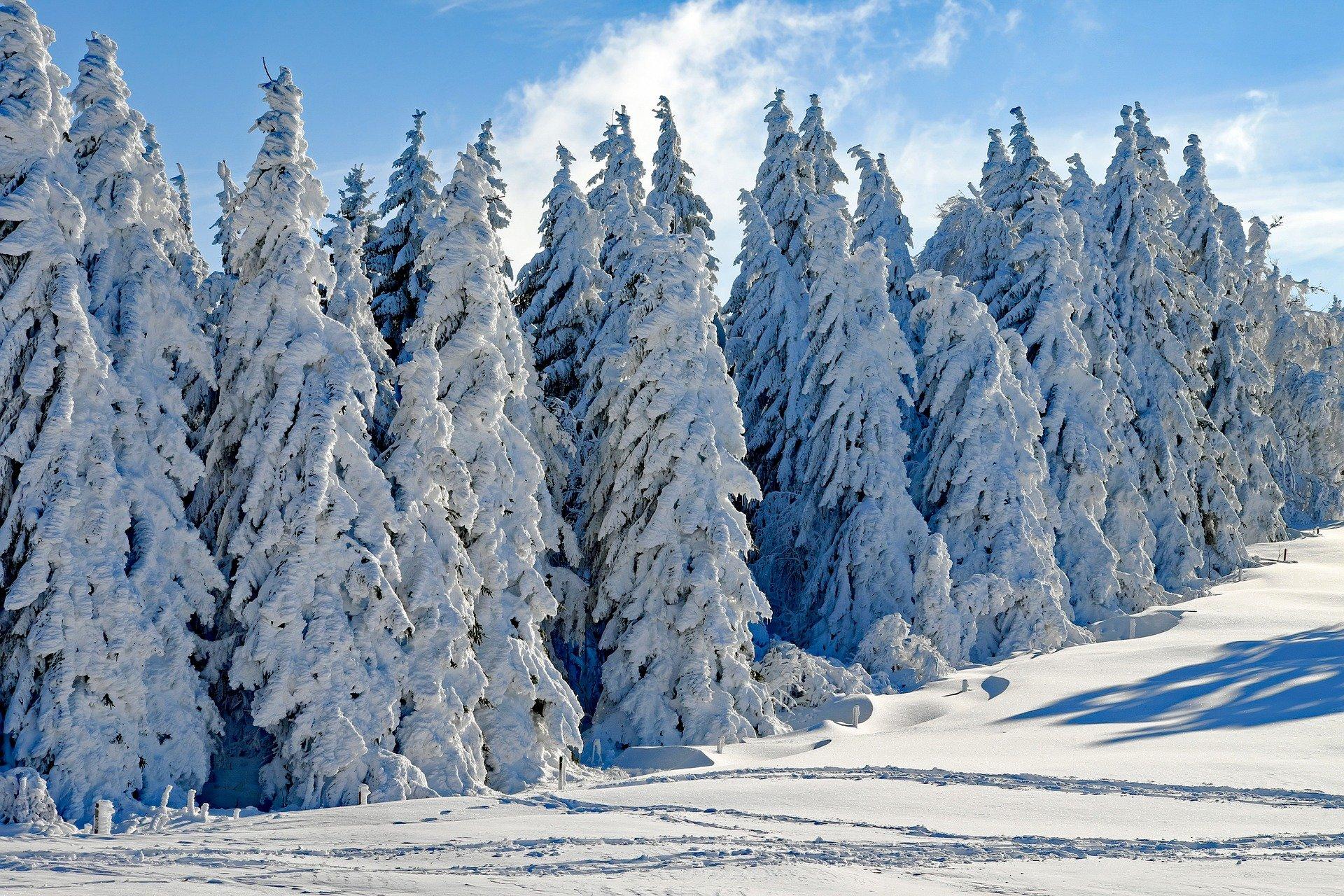 Sibérie Hivernal Neige Sapins - Couleur - GeekAnimea